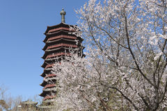 Stupa in chinese park in spring Stock Images