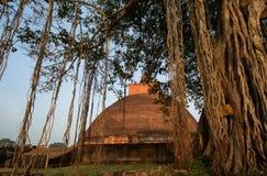 Stupa dagoba Jetavaranama, Anuradhapura, Σρι Λάνκα Στοκ φωτογραφία με δικαίωμα ελεύθερης χρήσης