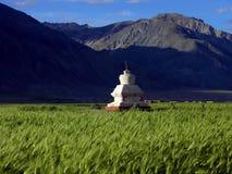 Stupa en campo de la cebada fotografía de archivo libre de regalías
