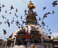 Stupa in kathmandu. Doves and stupa in Nepal Royalty Free Stock Photos