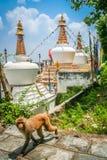 Stupa and monkey Royalty Free Stock Photo
