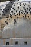 stupa pidgeons Стоковое Фото
