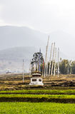 Stupa and rice terraces Stock Photography
