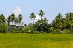 Stupa sri-lankais, palmiers, gisement de riz Photos stock