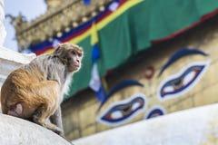 Stupa in Swayambhunath Monkey temple in Kathmandu, Nepal. Stock Images