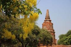Stupa velho em locais históricos e no chuveiro dourado de florescência de florescência imagem de stock