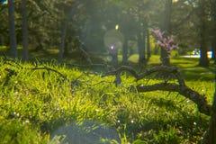 Stupad filial på jordning i gräs Royaltyfri Fotografi