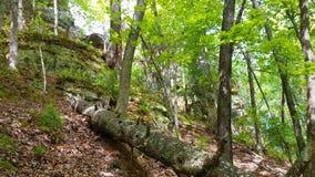 Stupad inloggningsskog Arkivfoto