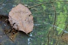stupad leaf Royaltyfri Bild