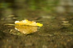 stupad leaf Arkivfoton