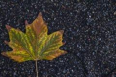 stupad leaf Arkivbilder