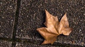 stupad leaf Royaltyfria Bilder