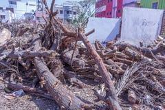 Stupad trädfilial klippt ner in i stycken Arkivfoton