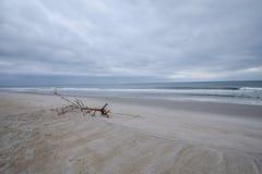 Stupad trädlem på stranden Arkivfoto