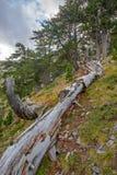 Stupad trädstam i bergskog arkivbild