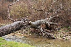 Stupad trädstam som överbryggar en skogflodvattenfall royaltyfri bild