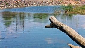 Stupad wood stam i floden lager videofilmer