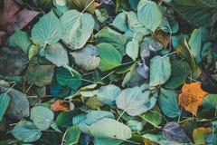 Stupade färgrika blad Arkivfoto