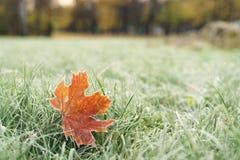 Stupade frostade höstlönnlöv på gräs Royaltyfri Foto