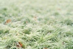 Stupade frostade höstlönnlöv på gräs Arkivbilder