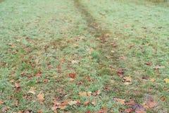 Stupade frostade lönnlöv i den frostiga morgonen Arkivfoto