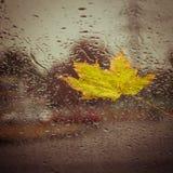 Stupade gula blad- och regndroppar Royaltyfri Bild