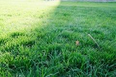 Stupade gula höstsidor på jordning Lapp av nytt grönt gräs i fokus i förgrund Den härliga nedgången parkerar royaltyfri foto