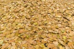 Stupade guling- och apelsinpoppelsidor Arkivfoton