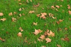 Stupade höstsidor på grönt gräs Fotografering för Bildbyråer