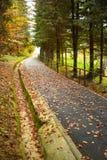 Stupade höstsidor på parkerar gränden Forest Foliage royaltyfri fotografi