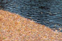 Stupade höstsidor som svävar på vatten Arkivbild