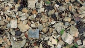 Stupade kottar på de torra visarna, jordning i skogen arkivfilmer