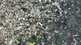 Stupade kottar på de torra visarna, jordningsyttersida i skogen arkivfilmer