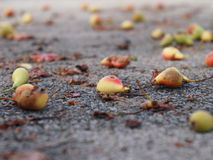 Stupade päron som ligger på jordning Arkivbild
