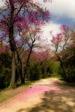 Stupade rosa färgsidor från träd fotografering för bildbyråer