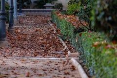 Stupade sidor av träd på jordningen av parkerar Typisk höstbild royaltyfri foto