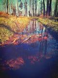 stupade sidor i vatten, vår Royaltyfri Fotografi