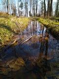 stupade sidor i vatten, vår Royaltyfri Foto