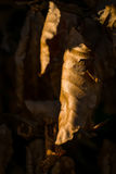 Stupade sidor på skoggolv Royaltyfria Foton