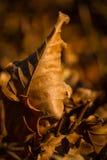 Stupade sidor på skoggolv Arkivfoton