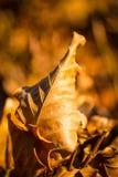 Stupade sidor på skoggolv Royaltyfri Foto