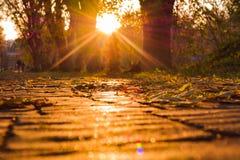 Stupade sidor på trottoaren med solnedgångsolen strålar Höst i staden arkivbild