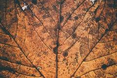 Stupade sidor textur och bakgrund Makrosikt av torra sidor organisk modell Abstrakt textur och bakgrund för design Royaltyfria Foton