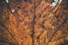 Stupade sidor textur och bakgrund Makrosikt av torra sidor organisk modell Abstrakt textur och bakgrund för design Arkivfoto