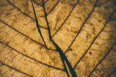 Stupade sidor textur och bakgrund Makrosikt av torra sidor organisk modell Abstrakt textur och bakgrund för design Fotografering för Bildbyråer