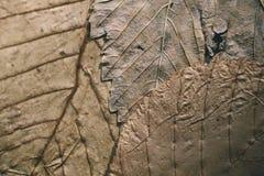 Stupade sidor textur och bakgrund Makrosikt av torra sidor organisk modell Abstrakt textur och bakgrund för design Royaltyfri Foto