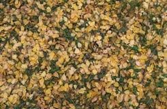 Stupade torra gulingsidor på fältet, hösttid Fotografering för Bildbyråer