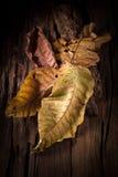 Stupade torra höstsidor på träbakgrund, abstrakt naturligt Royaltyfri Fotografi
