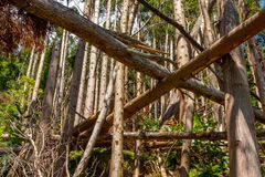 Stupade träd i barrskog royaltyfri fotografi