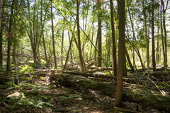 Stupade träd i träna Royaltyfria Foton